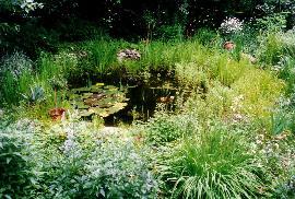 Pflaum gartengestaltung for Naturteich pflanzen